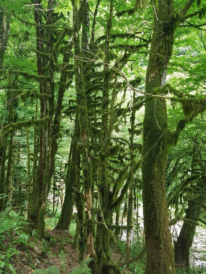 Ομορφιά Bewitching και μαγικός του ήρεμου δάσους πυξαριού στοκ φωτογραφίες
