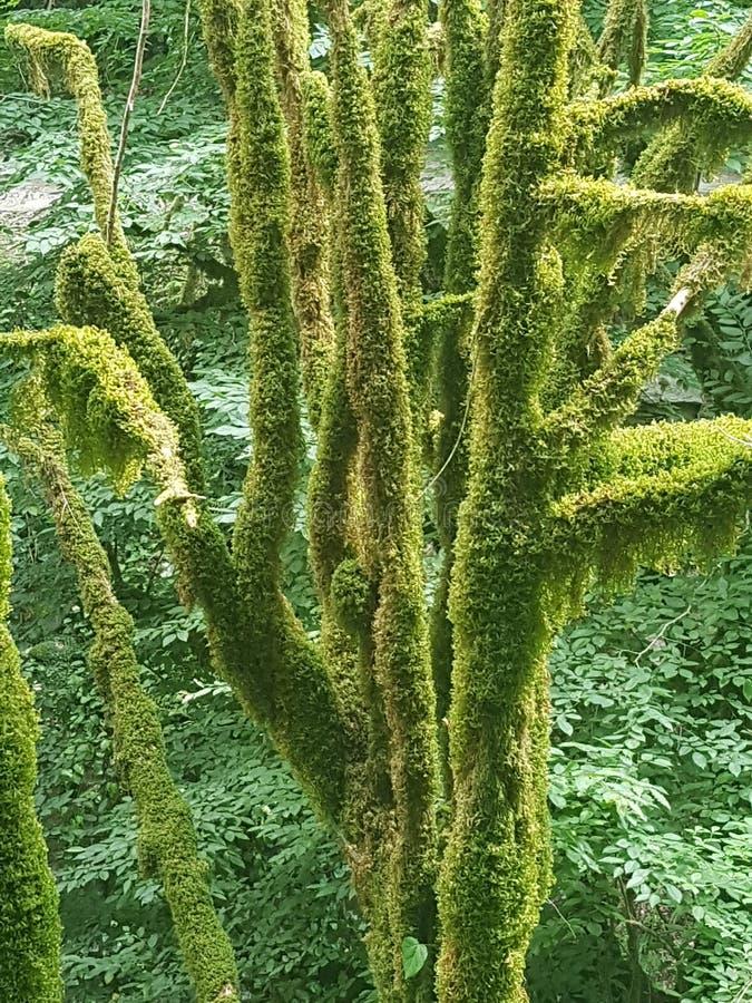 Ομορφιά Bewitching και μαγικός του ήρεμου δάσους πυξαριού στοκ εικόνα με δικαίωμα ελεύθερης χρήσης