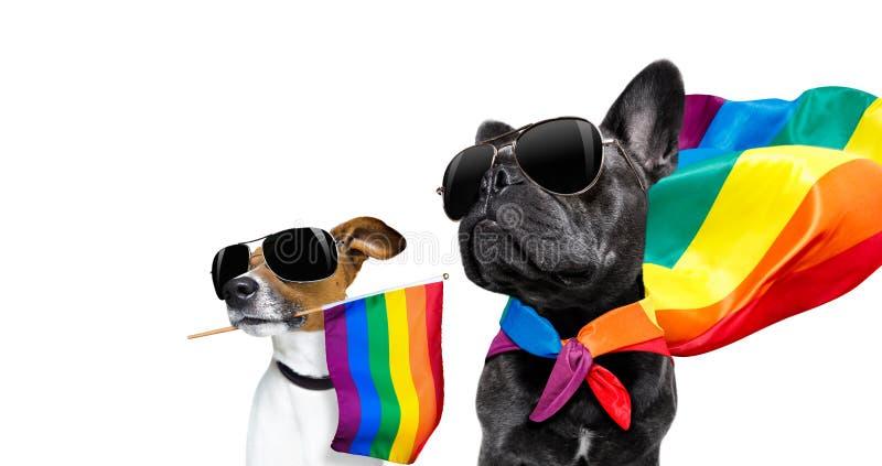 Ομοφυλοφιλικά σκυλιά υπερηφάνειας στοκ εικόνα με δικαίωμα ελεύθερης χρήσης