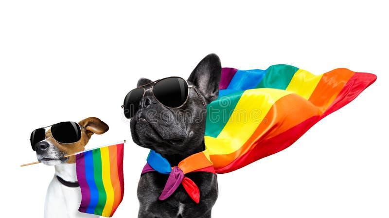 Ομοφυλοφιλικά σκυλιά υπερηφάνειας στοκ φωτογραφία με δικαίωμα ελεύθερης χρήσης