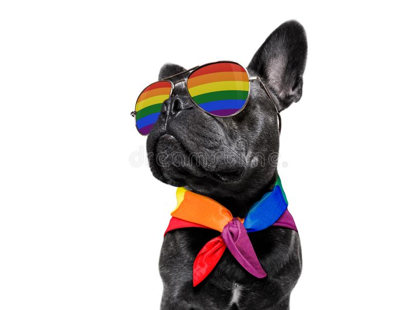 Ομοφυλοφιλικό σκυλί υπερηφάνειας στοκ φωτογραφία με δικαίωμα ελεύθερης χρήσης