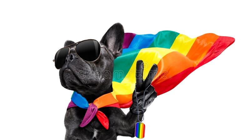 Ομοφυλοφιλικό σκυλί υπερηφάνειας στοκ φωτογραφία
