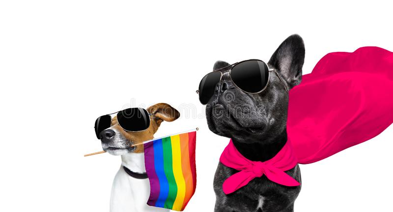Ομοφυλοφιλικό σκυλί υπερηφάνειας στοκ εικόνες με δικαίωμα ελεύθερης χρήσης