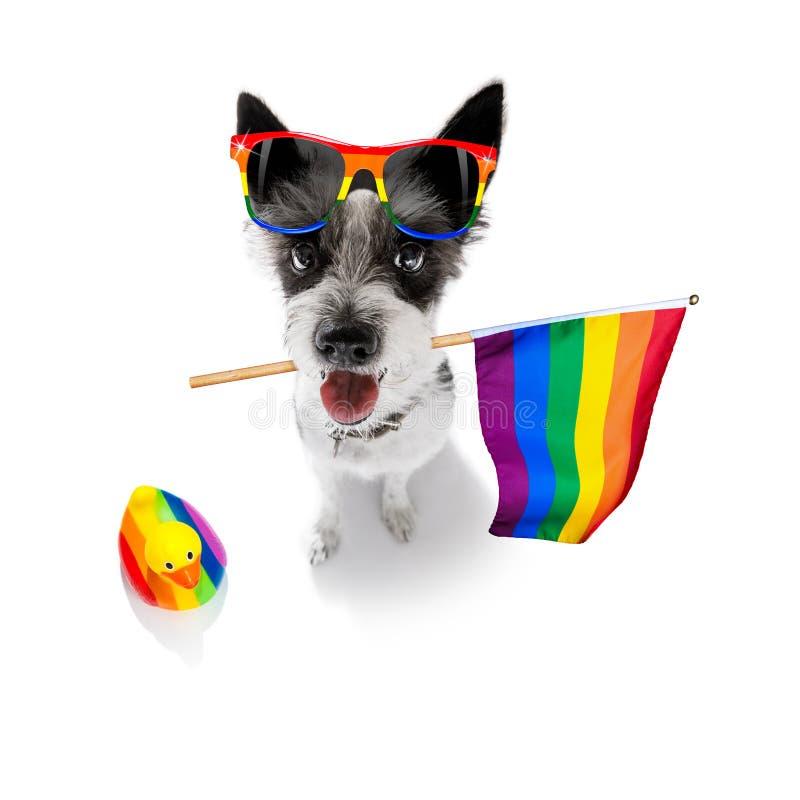 Ομοφυλοφιλικό σκυλί υπερηφάνειας στοκ φωτογραφίες