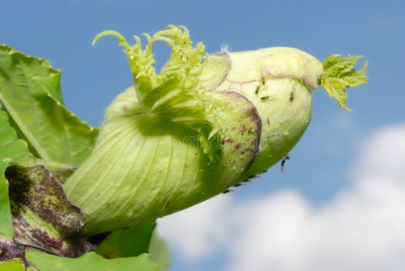 ομπρέλα ράβδων φυτών οικο&gam στοκ φωτογραφίες