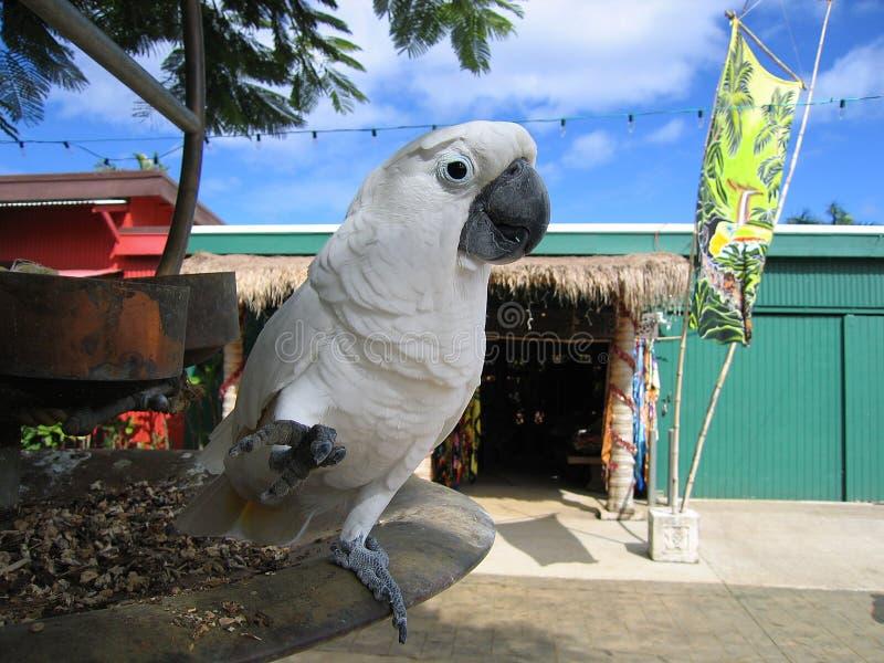 ομπρέλα cockatoo στοκ φωτογραφία