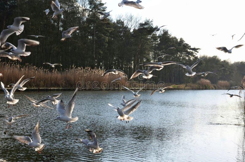 Ονειροπόλος εικόνα μερικά seagulls που πετούν πέρα από τον ποταμό στοκ εικόνα