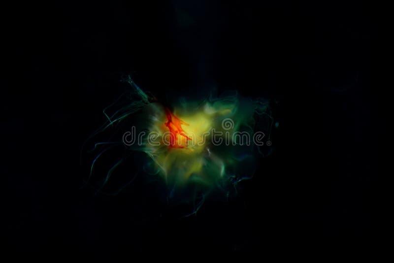Ονειροπόλος ζωηρόχρωμη αφηρημένη μέδουσα στοκ φωτογραφία