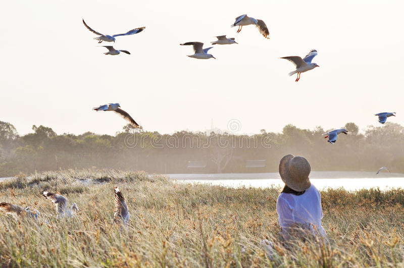 Ονειροπόλος μαλακή γυναίκα στο πεδίο χλόης & το πέταγμα πουλιών στοκ εικόνες