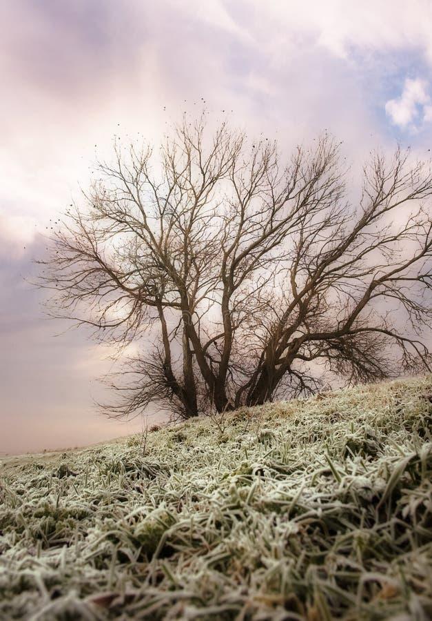 ονειροπόλος χειμώνας δέν στοκ φωτογραφίες με δικαίωμα ελεύθερης χρήσης