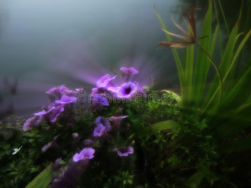Ονειροπόλος μαλακός το λουλούδι, μπλε-γκρίζο σκηνικό στοκ εικόνα με δικαίωμα ελεύθερης χρήσης