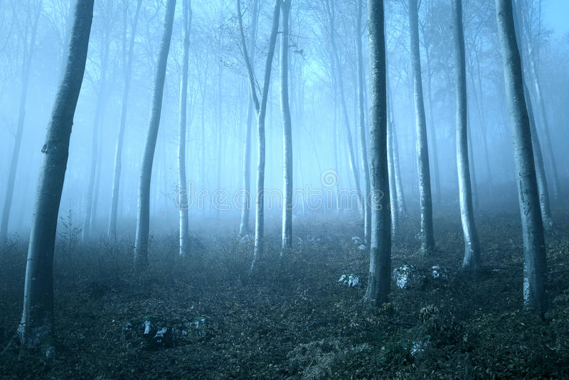 Ονειροπόλο μπλε χρωματισμένο δασικό τοπίο στοκ φωτογραφίες