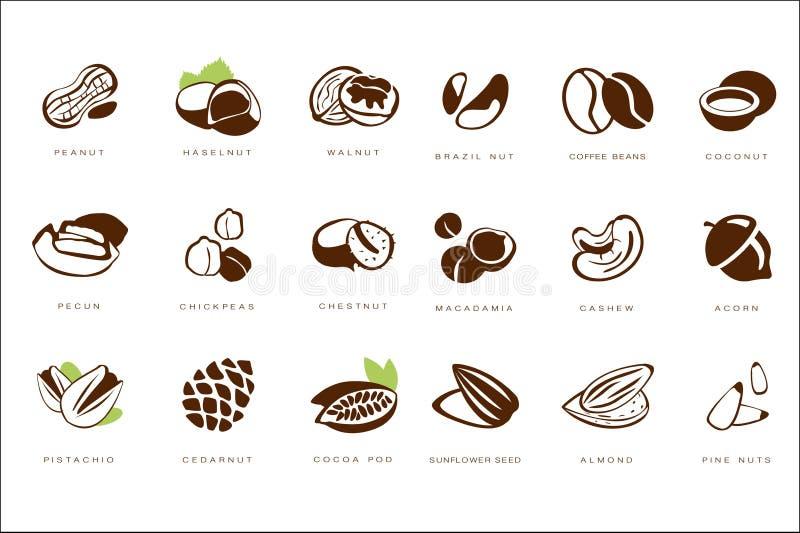 Ονομασμένα καρύδια καθορισμένα, φυστίκι, haselnut, ξύλο καρυδιάς, καρύδι της Βραζιλίας, φασόλι καφέ, καρύδα, pecun, chickpeas, κά διανυσματική απεικόνιση