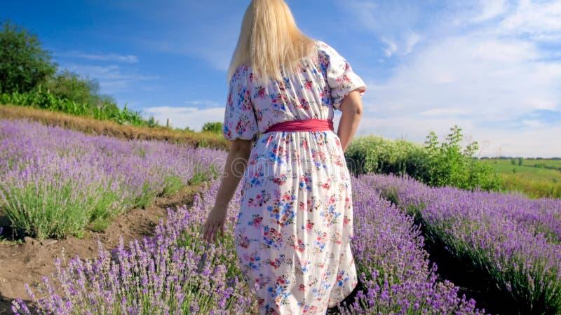 Οπισθοσκόπος εικόνα της νέας ξανθής γυναίκας στο φόρεμα που περπατά lavender στον τομέα στοκ φωτογραφία