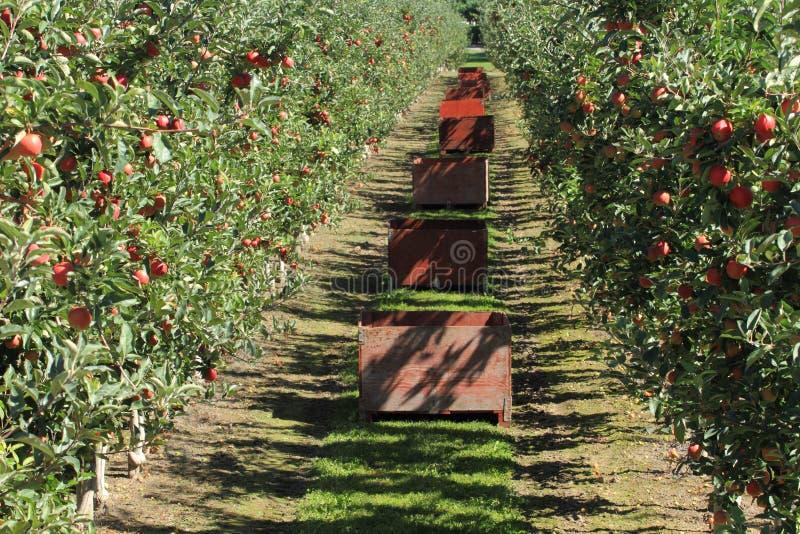 Οπωρώνας μήλων 02 στοκ εικόνες