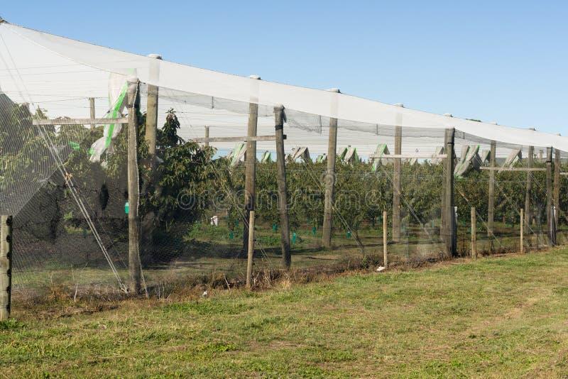 Οπωρώνας της Apple που προστατεύεται με την αλιεία με δίχτυα πουλιών στοκ φωτογραφίες
