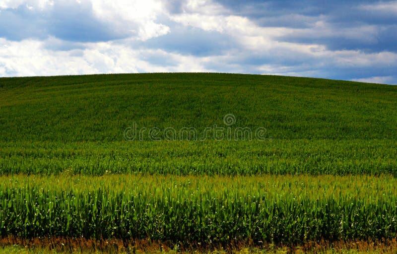 Ορίζοντας καλαμποκιού στη σκιά στοκ εικόνα με δικαίωμα ελεύθερης χρήσης