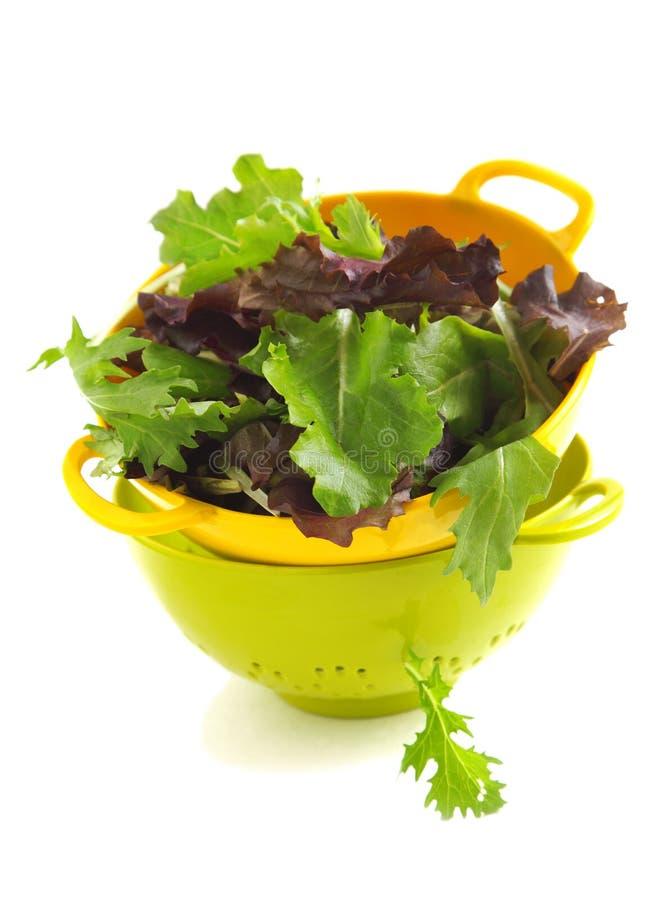 Οργανικά πράσινα φύλλα μιγμάτων άνοιξη για τη σαλάτα στοκ φωτογραφία
