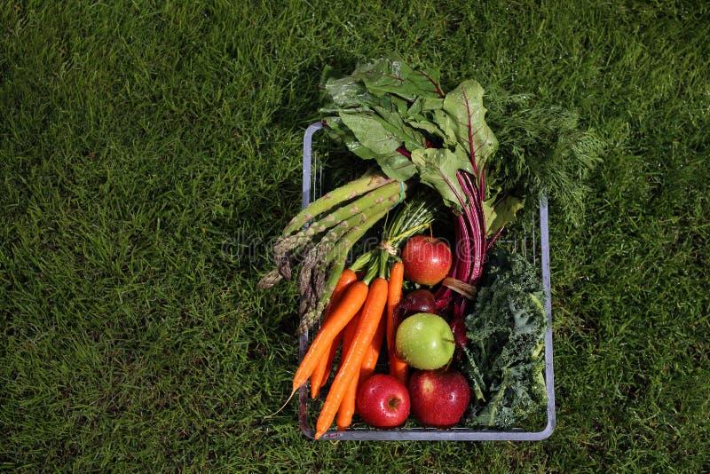 Οργανικά υγιή λαχανικά του φυτικού κήπου σας στοκ εικόνα με δικαίωμα ελεύθερης χρήσης