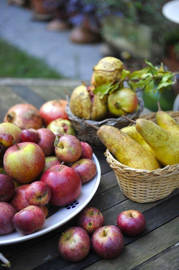 Οργανικά χειμερινά φρούτα στοκ φωτογραφίες
