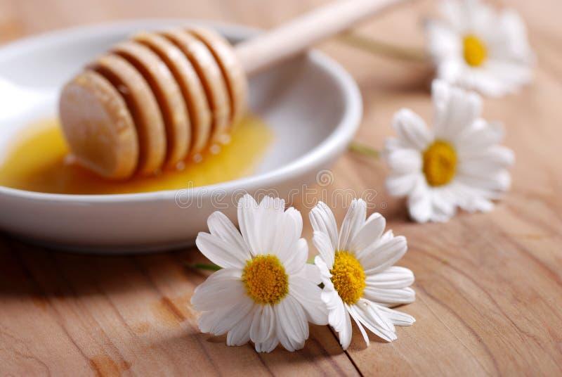 Μέλι και μαργαρίτες στοκ εικόνα
