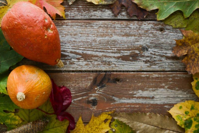 Οργανικές κολοκύθες του Hokkaido στην αγροτική διακόσμηση φθινοπώρου με το αντίγραφο στοκ φωτογραφίες με δικαίωμα ελεύθερης χρήσης