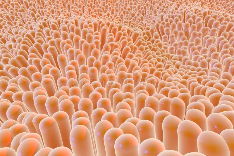 Οργανικές μικροσκοπικές ίνες ιστού απεικόνιση αποθεμάτων
