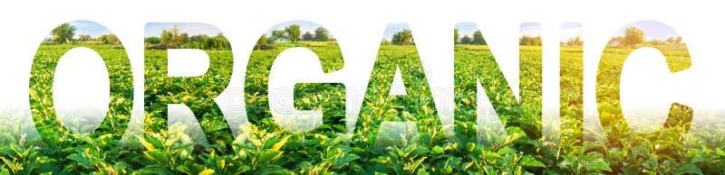 Οργανική επιγραφή στο φόντο του πεδίου φυτείας των θάμνων μελιτζάνας καλλιέργεια χωρίς επιβλαβείς χημικές ουσίες, φυτοφάρμακα στοκ φωτογραφίες με δικαίωμα ελεύθερης χρήσης