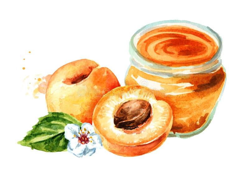 Οργανική μαρμελάδα φρούτων Βάζο γυαλιού της μαρμελάδας βερίκοκων και των νωπών καρπών που απομονώνονται στο άσπρο υπόβαθρο Χέρι W στοκ φωτογραφίες με δικαίωμα ελεύθερης χρήσης