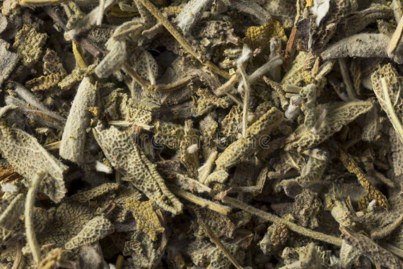 Οργανική ξηρά πράσινη φασκομηλιά στοκ φωτογραφίες με δικαίωμα ελεύθερης χρήσης