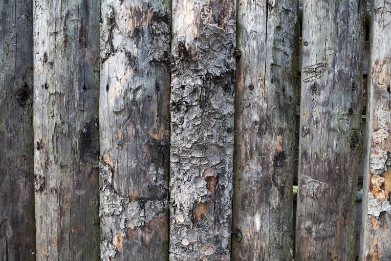Οργανική τροφή Μεγάλες, σκοτεινές, παλαιές ξύλινες σανίδες με την πράσινη χλόη Επιλογές για το οργανικό εστιατόριο Υπόβαθρο για τ στοκ εικόνα
