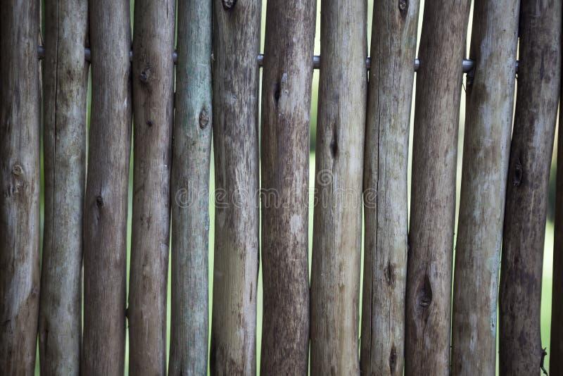 Οργανική τροφή Μεγάλες, σκοτεινές, παλαιές ξύλινες σανίδες με την πράσινη χλόη Επιλογές για το οργανικό εστιατόριο Υπόβαθρο για τ στοκ φωτογραφία