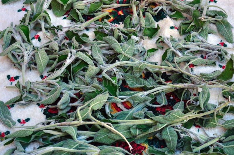 οργανική φασκομηλιά φυτώ&nu στοκ φωτογραφίες με δικαίωμα ελεύθερης χρήσης