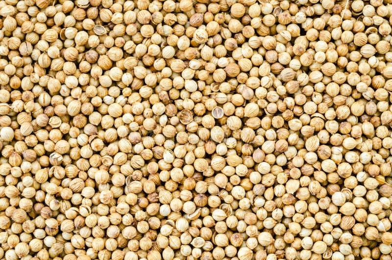 Οργανικοί ξηροί σπόροι κορίανδρου (Coriandrum sativum) στοκ εικόνες με δικαίωμα ελεύθερης χρήσης