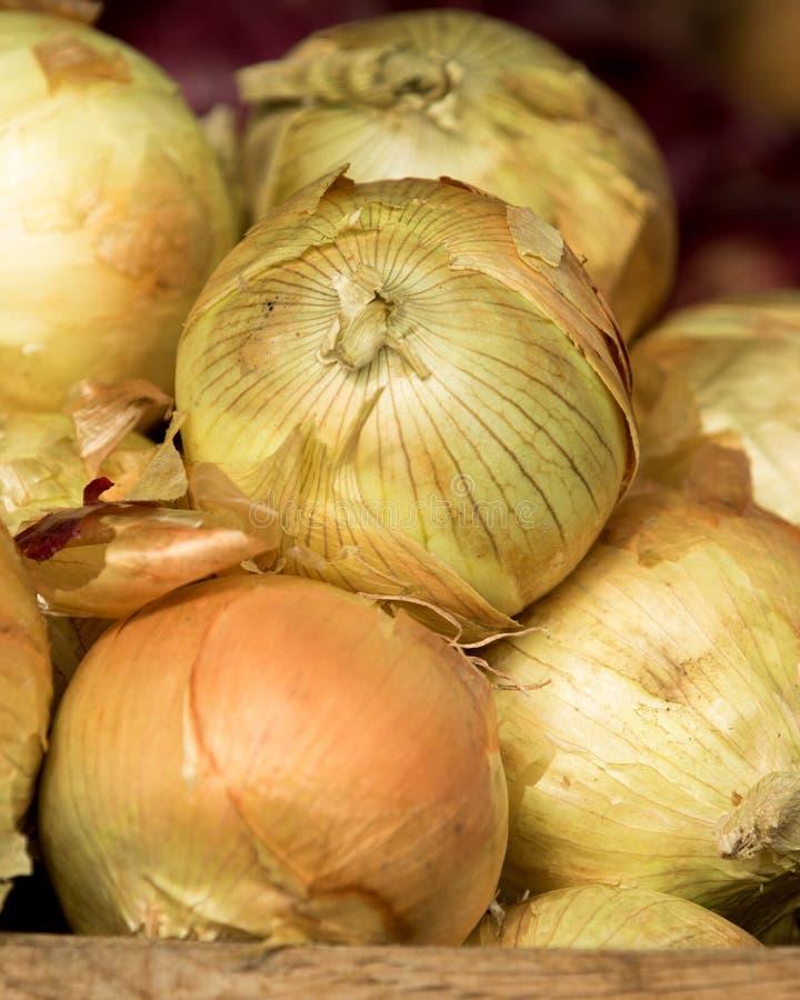 Οργανικό άσπρο κρεμμύδι στην αγορά της Farmer στοκ εικόνες με δικαίωμα ελεύθερης χρήσης