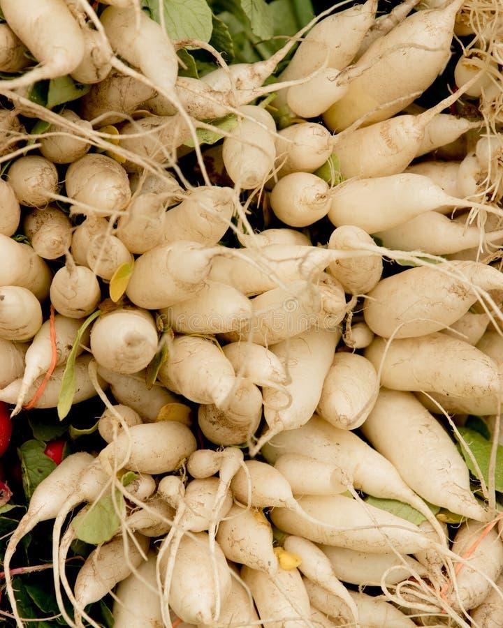 Οργανικό άσπρο ραδίκι στην αγορά της Farmer στοκ εικόνες