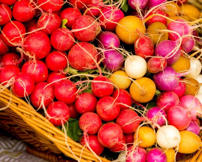 Οργανικό κόκκινο, πορτοκαλί, άσπρο και πορφυρό ραδίκι στοκ φωτογραφία με δικαίωμα ελεύθερης χρήσης