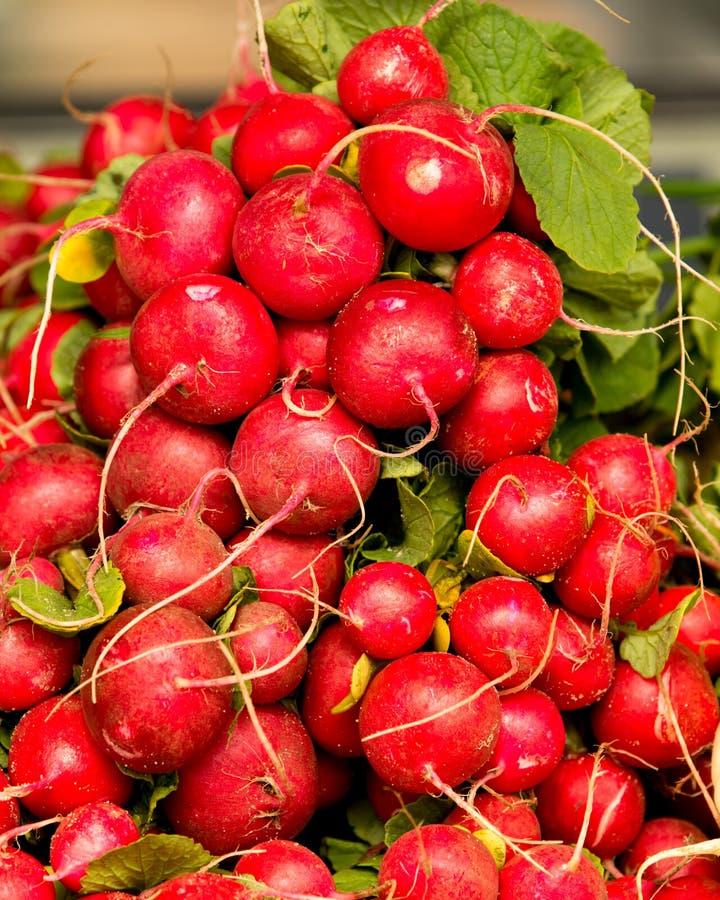Οργανικό κόκκινο ραδίκι στην αγορά της Farmer στοκ εικόνες