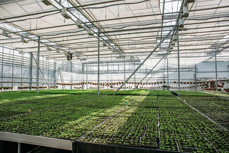 Οργανικό υδροπονικό αγρόκτημα βρεφικών σταθμών καλλιέργειας διακοσμητικών εγκαταστάσεων Μεγάλο σύγχρονο θερμοκήπιο ή θερμοκήπιο,  στοκ εικόνες με δικαίωμα ελεύθερης χρήσης