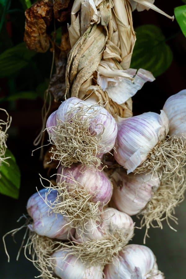 Οργανικό φυσικό φρέσκο ξηρό ώριμο σκόρδο στοκ εικόνες με δικαίωμα ελεύθερης χρήσης