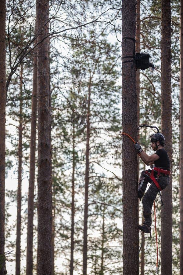 Ορειβάτης δέντρων επάνω σε ένα δέντρο με την αναρρίχηση του εργαλείου στοκ φωτογραφία με δικαίωμα ελεύθερης χρήσης