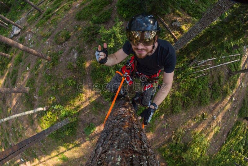 Ορειβάτης δέντρων επάνω σε ένα δέντρο με την αναρρίχηση του εργαλείου στοκ εικόνες