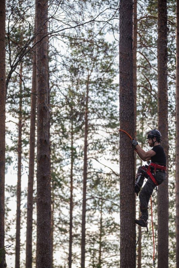 Ορειβάτης δέντρων επάνω σε ένα δέντρο με την αναρρίχηση του εργαλείου στοκ εικόνα με δικαίωμα ελεύθερης χρήσης