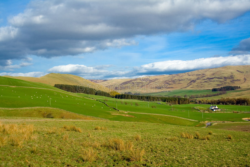 ορεινές περιοχές σκωτσέ&zeta στοκ εικόνα