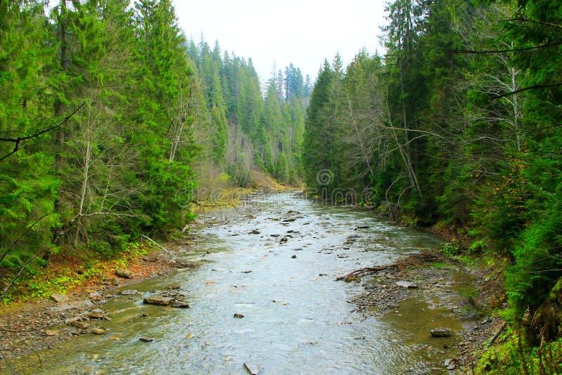 Ορεινός ποταμός στο δάσος των Καρπάθιων βουνών στοκ εικόνα με δικαίωμα ελεύθερης χρήσης