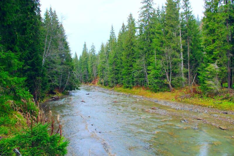 Ορεινός ποταμός στο δάσος των Καρπάθιων βουνών στοκ εικόνες