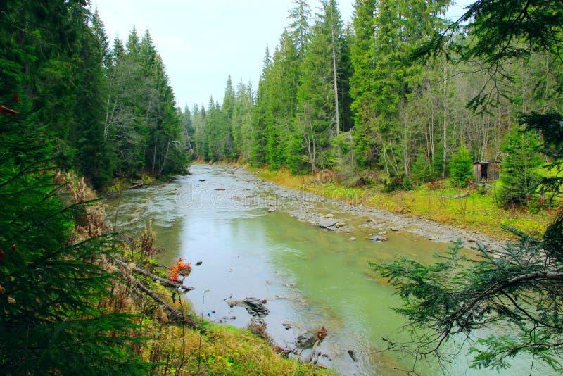 Ορεινός ποταμός στο δάσος των Καρπάθιων βουνών στοκ εικόνα