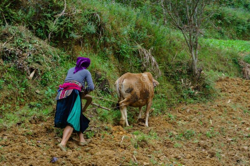 Ορεινός τομέας αρότρων αγροτών στοκ εικόνα με δικαίωμα ελεύθερης χρήσης
