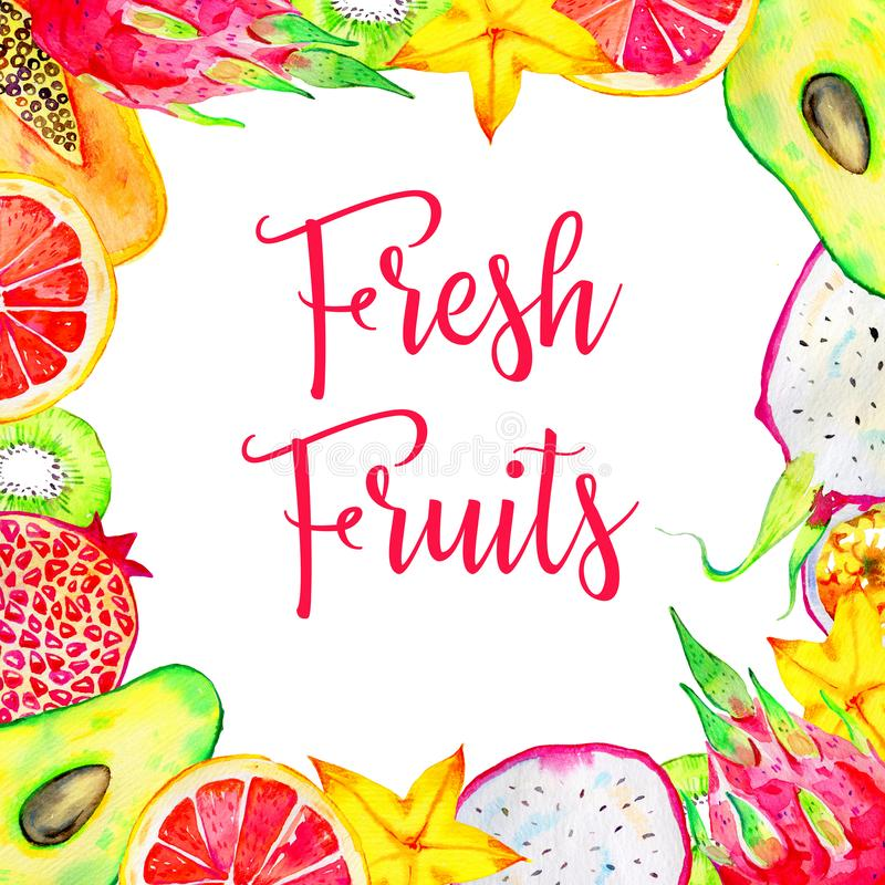 Ορθογώνιο πλαίσιο με τα εξωτικά φρούτα Αβοκάντο, pitahaya, ακτινίδιο, εσπεριδοειδή, αβοκάντο, papaya Συρμένη χέρι απεικόνιση wate στοκ φωτογραφία με δικαίωμα ελεύθερης χρήσης