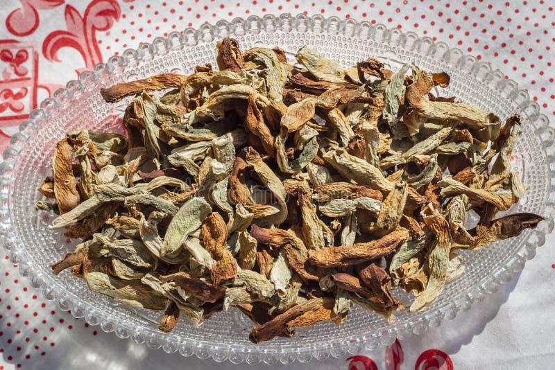 Οριζόντιος καλλιεργημένος βλαστός των παραδοσιακά ξηρών κατώτερων φασολιών σειράς ήλιων σε διαφανή με το επιτραπέζιο φύλλο στοκ φωτογραφίες με δικαίωμα ελεύθερης χρήσης